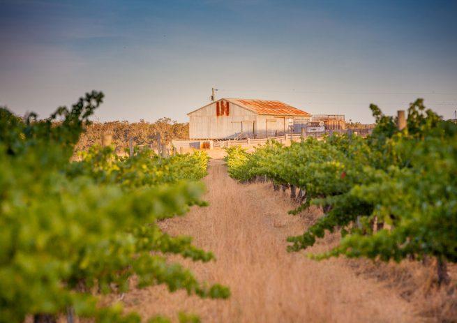 (Image-6)-Abercrombie-Vineyard,-Howard-Park