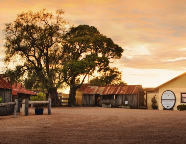 (Image-7)-Tyrrells-Wines---Cellar-Door-and-Old-Hut-at-sunrise-300dpi-MEDIUM